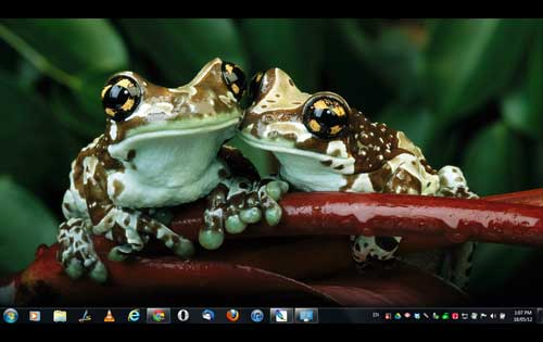 Animal Affection - Must to try Windows Theme