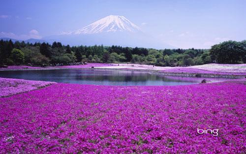 Best of Bing Japan
