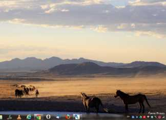 never seen images of wild horses