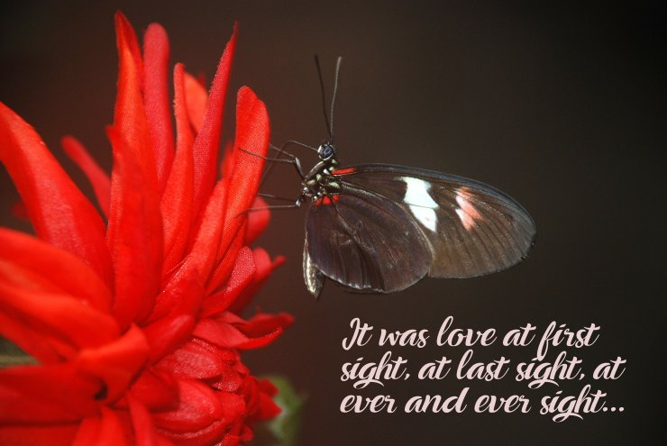 It was love at first sight. Attractive Picture Love Quotes - First Love