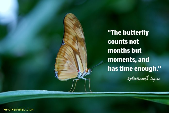 Motivational Tagore Quotes - picture quote 2