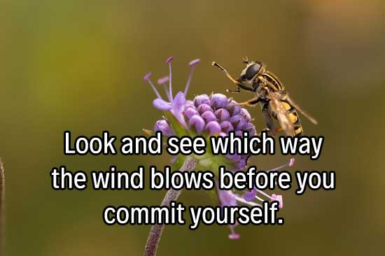 Look and see which way the wind blows before you commit yourself.